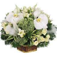 Snow-white arrangement