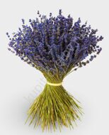 Big bouquet of lavender