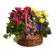 Basket of potted plants