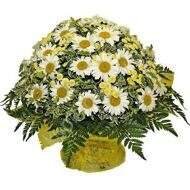 Bouquet of garden daisies