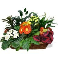Arrangement of potted plants