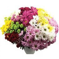 Bush chrysanthemum mix