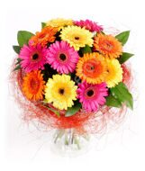 Monoboquet of colorful gerberas