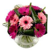 Bouquet of pink and crimson gerberas