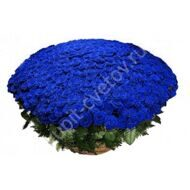 Bouquet of 301 blue roses in a basket