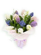 Spring bouquet of hyacinths