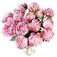 Bouquet  of 15 peonies