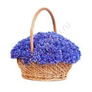 Basket Blue-bonnet Paradise