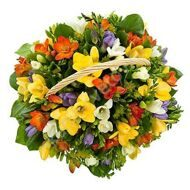 Basket freesias